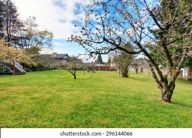 Large authentic and furnished back yard with lots of grass.