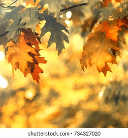 Large autumn oak leaves on branches. Oak-tree with leaves closeup on a blurred background.
