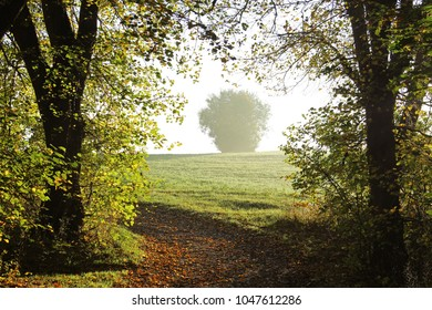 large autumn trees framing the view to a bush on a sunny field