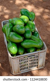 Large avocados or Persea americana, from Hall or Choquette variety, in a plastic storage bin, sold in Cuba by local independent farmers, on the side of the country roads or at the local markets