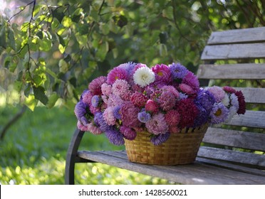 Large basket full of beautiful colorful china asters on a bench under the branches of trees in an autumn garden. Still life with flowers. Selective focus.