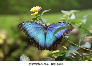 large beautiful colored butterfly feeding on a plant