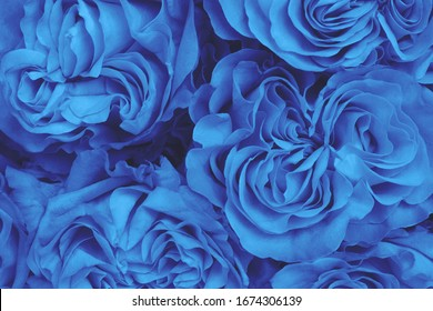 Large beautiful delicate pink homemade roses. Declaration of love. A romantic gift for your beloved. Classic blue.