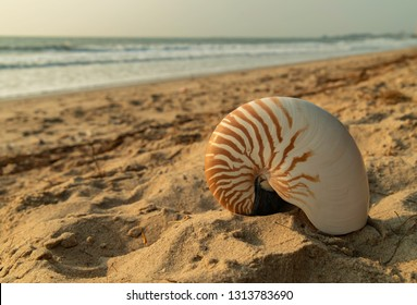 Large beautiful sea shell on sand with wave of sea in the morning light