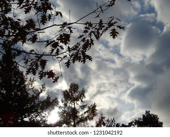 Large billowy white and gray clouds with tree leave silhouettes and sun shining thru them