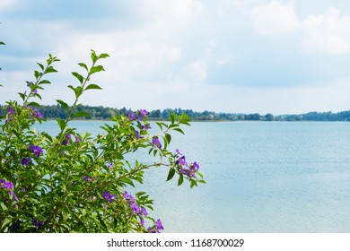 Large blowballs bunch against lake landscape background. Big green bunch with blue flowers near blue water. Summer flowers. violet flowers with green grass in sunny day.