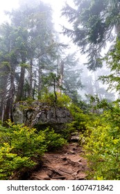 A large boulder with trees and foliage growing on top of it, hidden in the misty pine forests of British Columbia on the hiking route from Cypress Mountain to St Marks Summit in South East Canada.