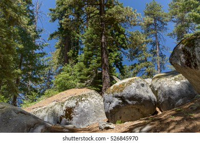 Large boulders in the fir forest landscape