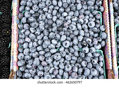 Large box of fresh organic blueberries at an outdoor market in Seattle.
