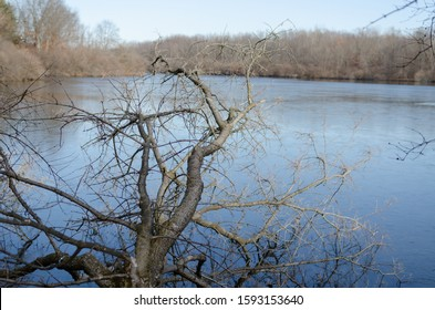 A large branch over a lake in central Illinois on a cold winter day