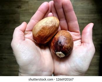 Large brown avocado bones in the palms.