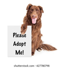 Large brown crossbreed dog holding sign saying Please Adopt Me