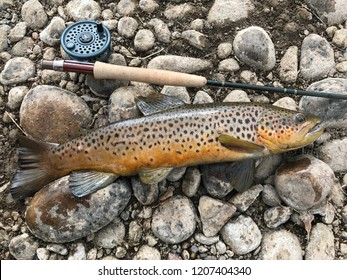 A large Brown Trout fish with a mountain stream in the background