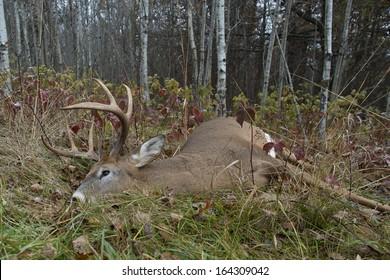A large buck taken during deer season