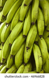 A large bunch of green bananas on a plantation in the Galapagos Islands.