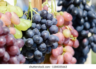Large bunches of grapes of different varieties, close-up