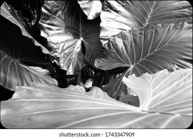 Large Canopy of Fern Leaves