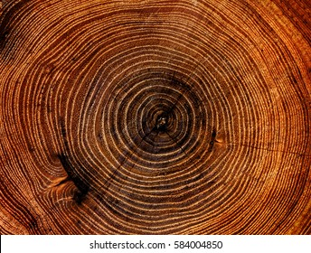 Large circular piece of wood cross section with tree ring texture pattern and cracks. Orange and black circular dark pattern.