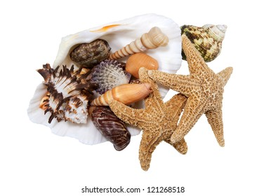 large clam shell with a variety of seashells on a white background