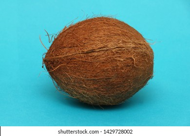 Large coconut tropical fruit on blue background