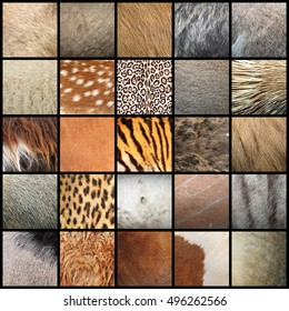 large collection of animal fur textures ready for your design