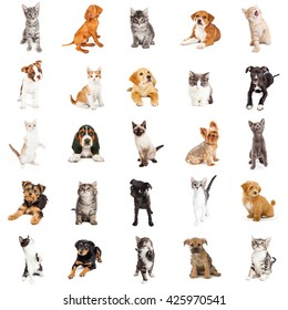 Large collection of cute puppies and kittens on square white background that can be made into repeating pattern