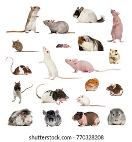 Large collection of rodent, pet and exotic, in different position, Isolated on white background.