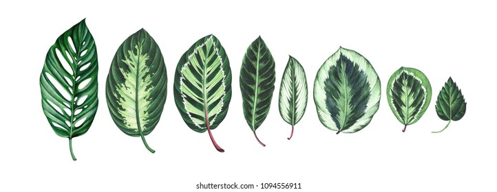 Large collection of tropical leaves isolated on white background. Watercolor hand drawn illustration.