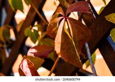 Large, colorful leaves and wooden slats.