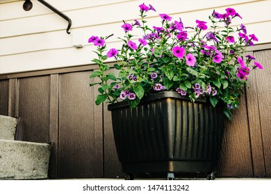 Large colorful potted plant outside the front of a home house for curb appeal