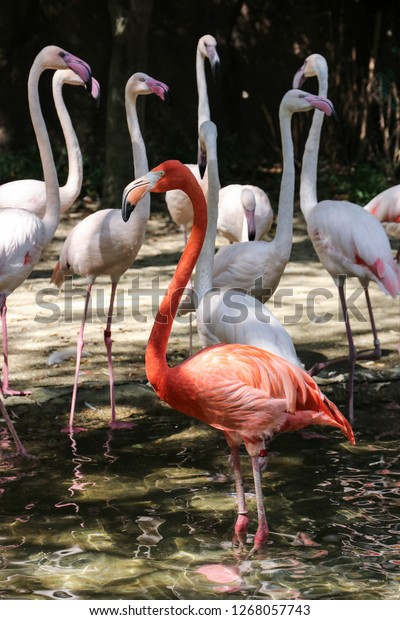 large-coral-flamingo-surrounded-by-600w-