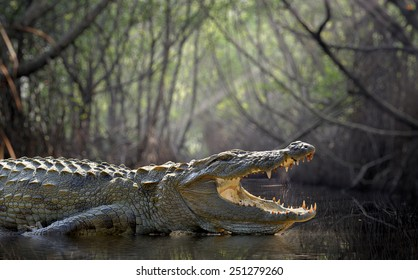 Large crocodile, National Park, Sri Lanka