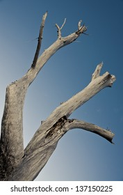 Large dead tree trunk of driftwood set against a blue sky.