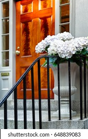Large decorative urn planted with blooming white hydrangea flowers outside an elegant front door and steps with black iron railing. Location: Boston