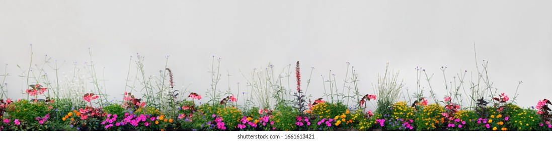 Annual Flowers Images Stock Photos Vectors Shutterstock