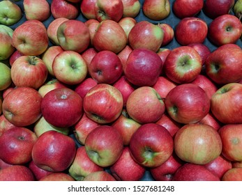 Large display of bulk apples of the Pink lady type, locally grown, with minor damage.Pink Lady apples in bulk and unsorted, stored  for transport on a cardboard wholesaler's tray, Australian grown.