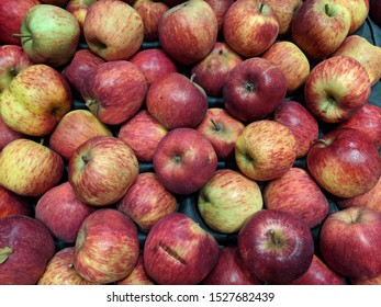 Large display of bulk apples of the red- delicious type, locally grown, with minor damage. Apples in bulk, unsorted and  stored  for transport on a cardboard wholesaler's tray, not for export.