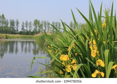 a large ditch in the countryside with a group of yellow irises in the front