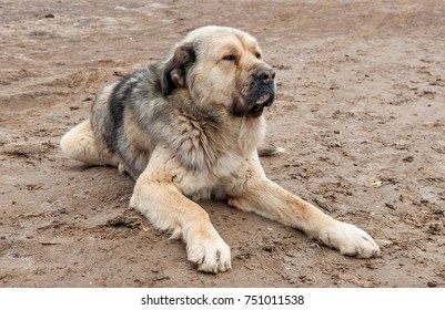 a large dog guards
