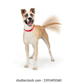Large dog looking up with happy expression and wagging tail with motion blur