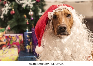 Large dog in red christmas Santa hat