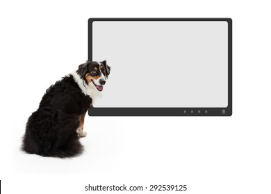 Large dog sitting in front of a big flat screen TV monitor with a blank screen to enter your design onto
