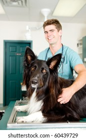 A large dog at a small animal clinic in the surgery prep. room.  Shallow depth of field, focus on dog