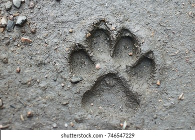 large dog's footprint a fresh imprint on  ground