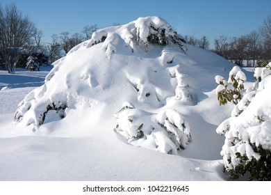 Large drifts of snow on evergreen bushes