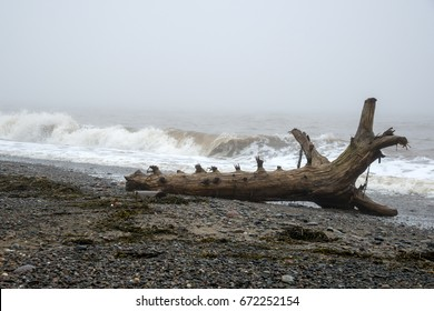 Large driftwood tree trunk on a beach. Waves breaking in the background. Dense fog over the ocean. Room for text.