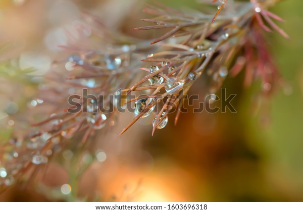 Large drops of dew on the branches of a young dill. Tender natural composition with orange-green background and beautiful bokeh.