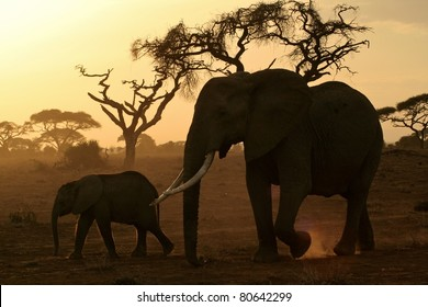 Large elephant matriarch and her calf walking across the dusty savanna plain