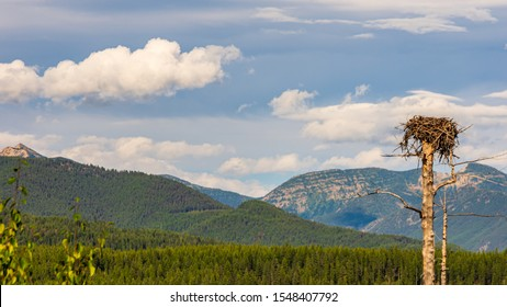 Large empty eagle's nest perched high on a treetop in the middle of the Flathead National Forest, Montana / USA, near the Hungry Horse Dam. Mountain peaks in the distance beneath a cloudy blue sky