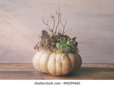 Large fairytale pumpkin centerpiece made with various succulent plants. Vintage camera filter with light leak and fade.